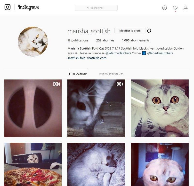 instagram-chaton