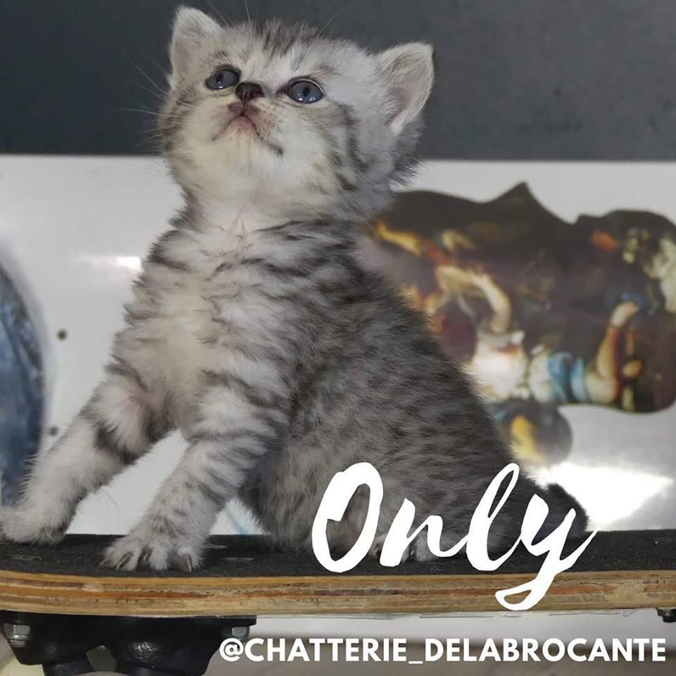 only-cat-scottish